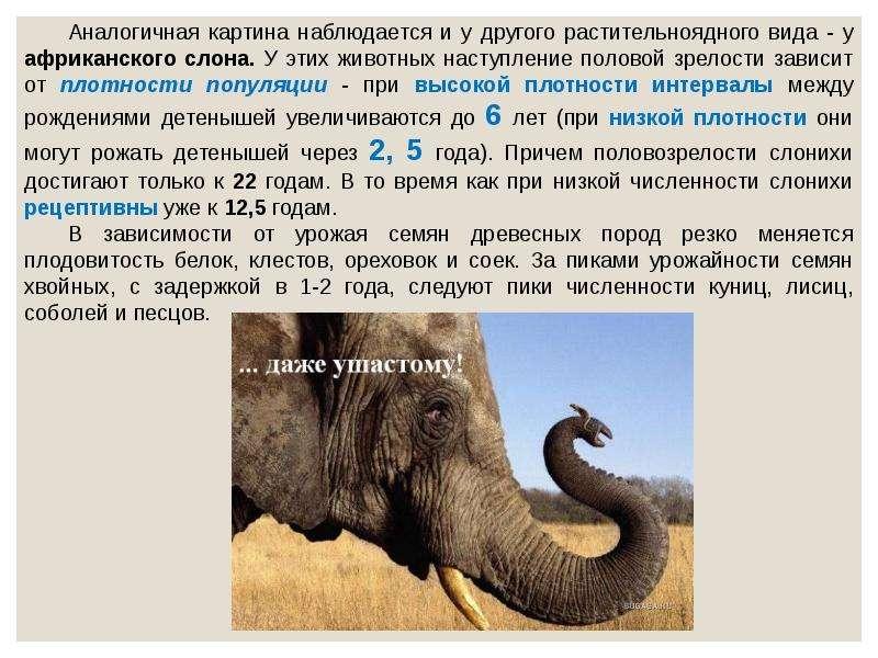 Экологический критерий вида. Экологические закономерности, связанные с питанием животных, слайд 27