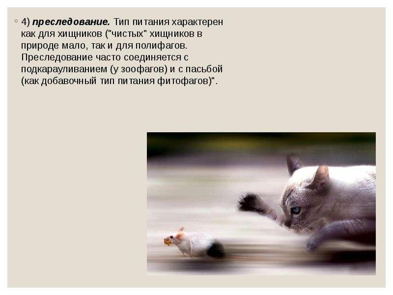 """4) преследование. Тип питания характерен как для хищников (""""чистых"""" хищников в природе мал"""