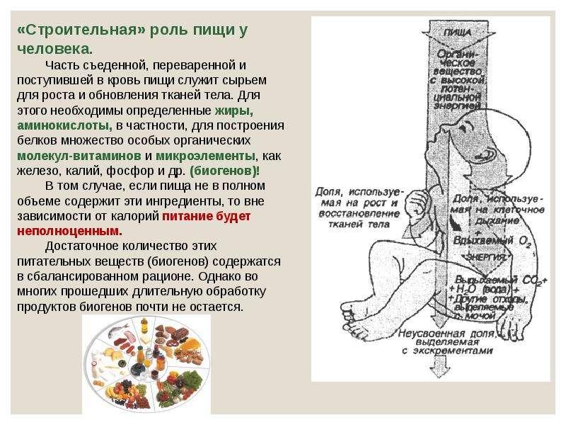 Экологический критерий вида. Экологические закономерности, связанные с питанием животных, слайд 44