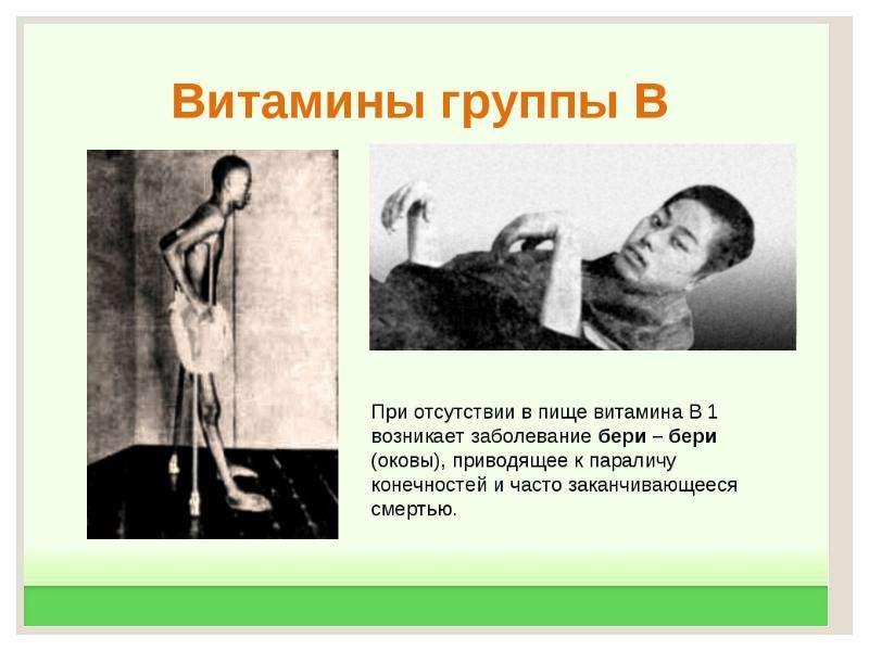 Экологический критерий вида. Экологические закономерности, связанные с питанием животных, слайд 47