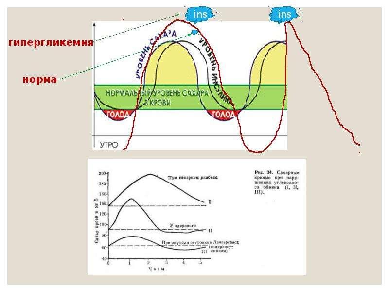 Экологический критерий вида. Экологические закономерности, связанные с питанием животных, слайд 49