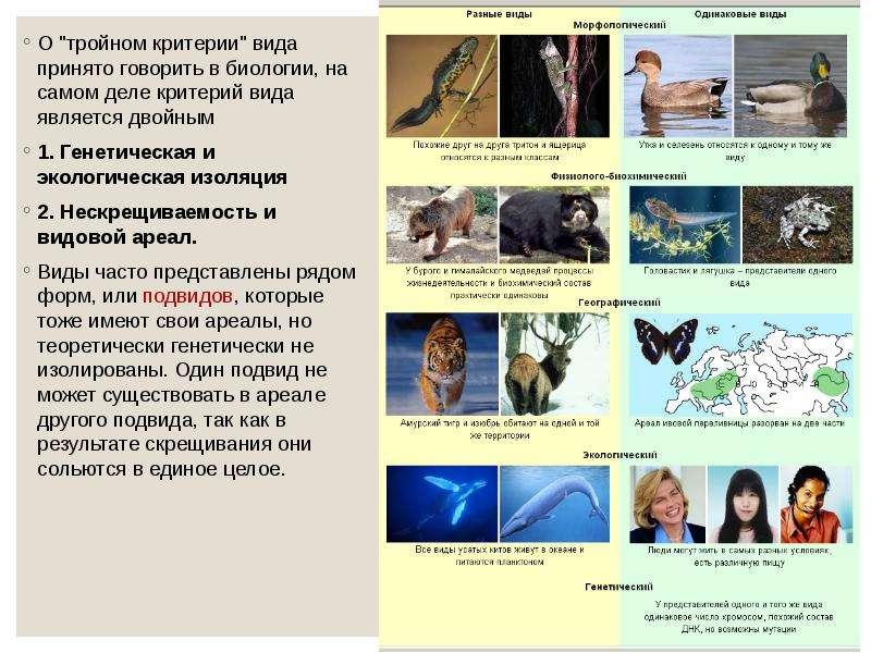 """О """"тройном критерии"""" вида принято говорить в биологии, на самом деле критерий вида являетс"""