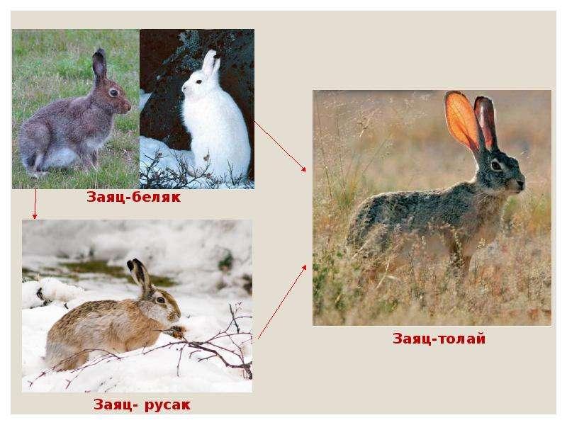 Экологический критерий вида. Экологические закономерности, связанные с питанием животных, слайд 8