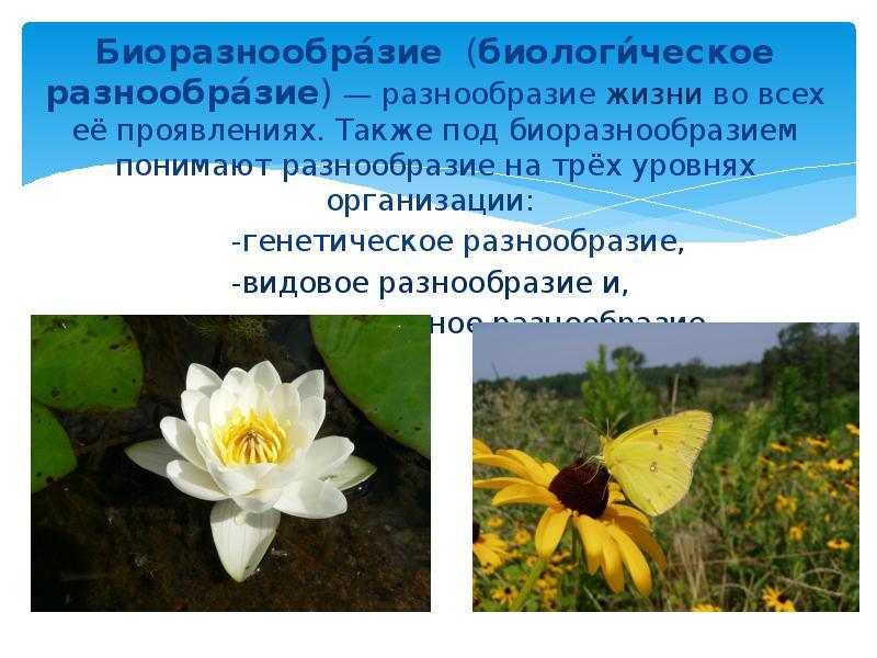 Биоразнообра́зие (биологи́ческое разнообра́зие) — разнообразие жизни во всех её проявлениях. Также п