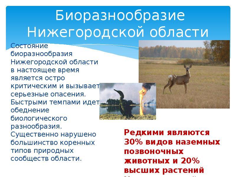 Биоразнообразие Нижегородской области Состояние биоразнообразия Нижегородской области в настоящее вр