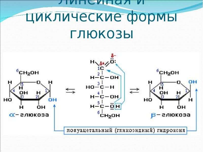 Линейная и циклические формы глюкозы