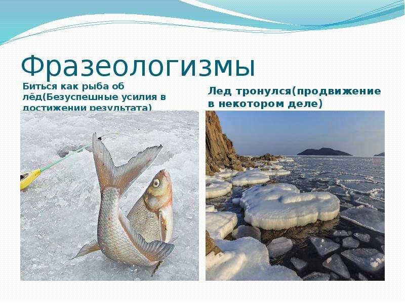 Фразеологизмы Биться как рыба об лёд(Безуспешные усилия в достижении результата)