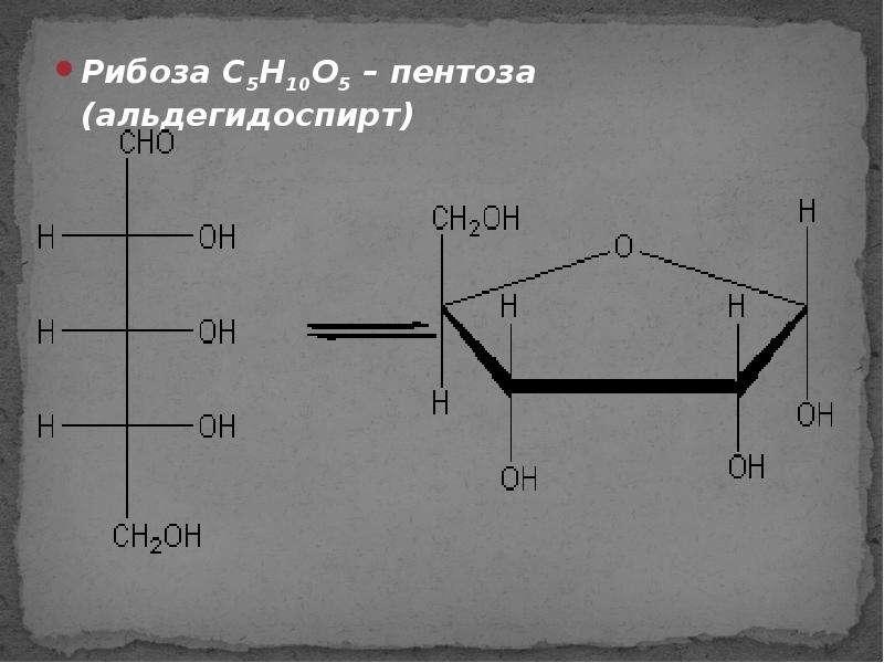 Рибоза C5H10O5 – пентоза (альдегидоспирт) Рибоза C5H10O5 – пентоза (альдегидоспирт)
