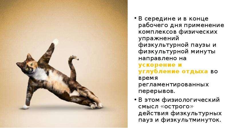 В середине и в конце рабочего дня применение комплексов физических упражнений физкультурной паузы и