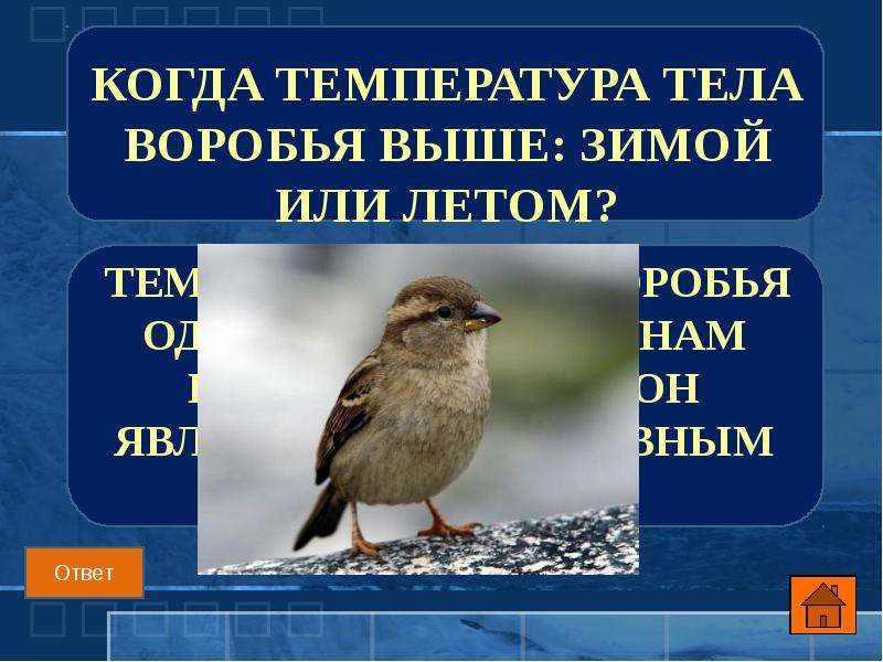 Когда температура тела воробья выше: зимой или летом?