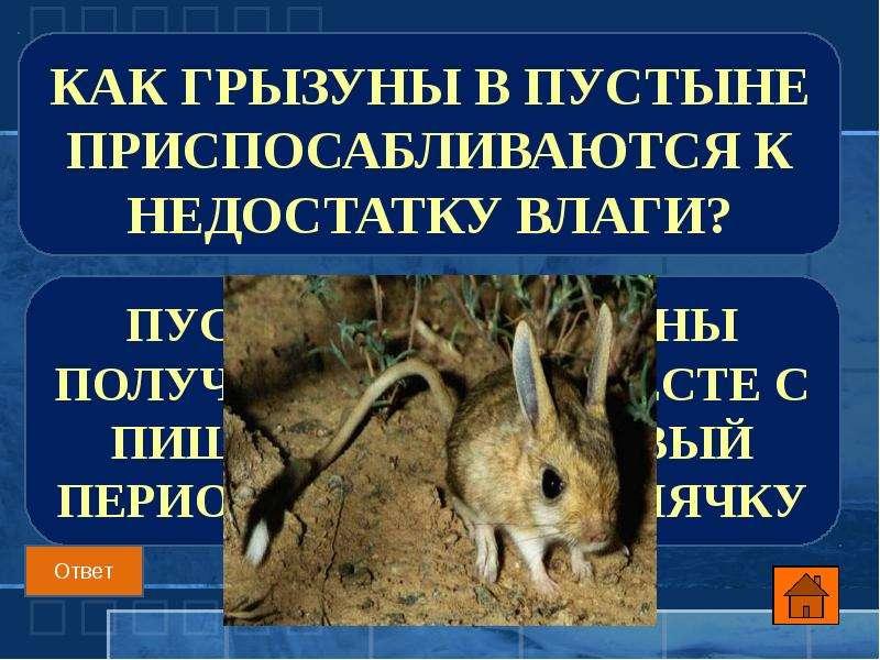 Как грызуны в пустыне приспосабливаются к недостатку влаги?