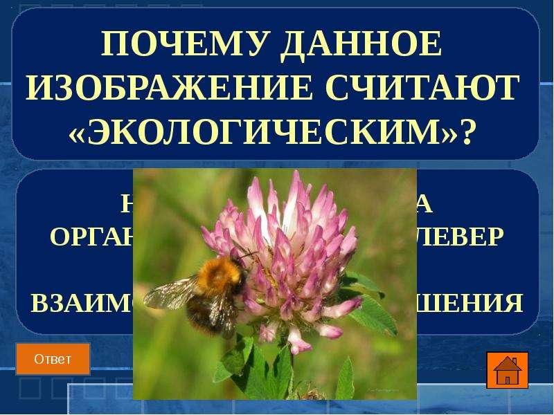 Почему данное изображение считают «экологическим»?