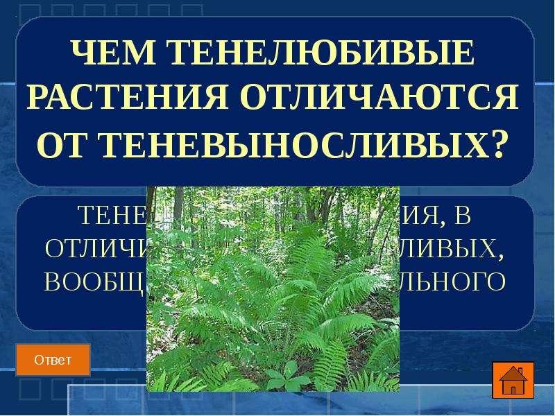 Чем тенелюбивые растения отличаются от теневыносливых?