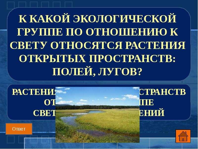 К какой экологической группе по отношению к свету относятся растения открытых пространств: полей, лу