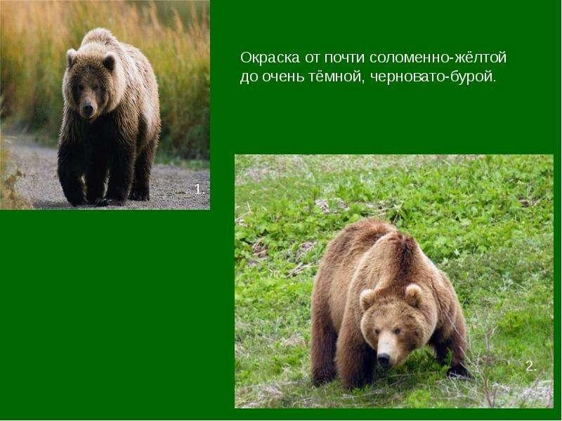 Фото животных из красной книги подмосковья