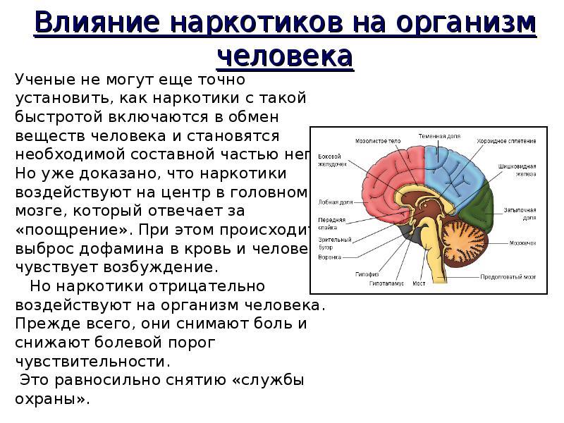 Наркомания и их пагубное воздействие на организм человека, слайд 14