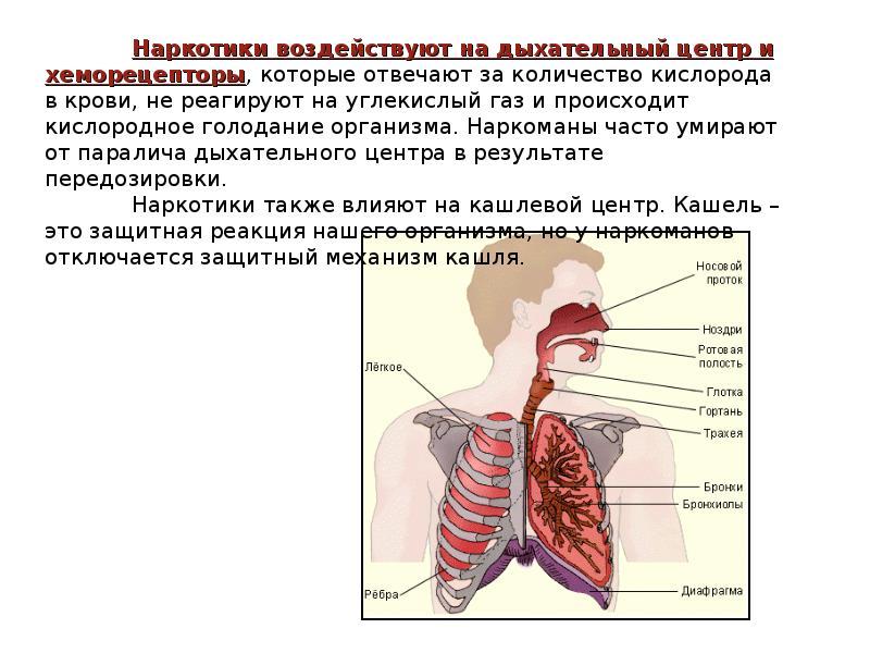 Наркомания и их пагубное воздействие на организм человека, слайд 15