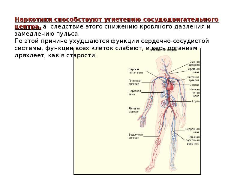 Наркомания и их пагубное воздействие на организм человека, слайд 16