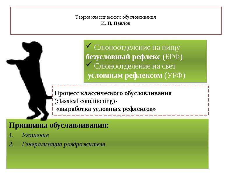 Теория классического обусловливания И. П. Павлов Принципы обуславливания: Угашение Генерализация раз