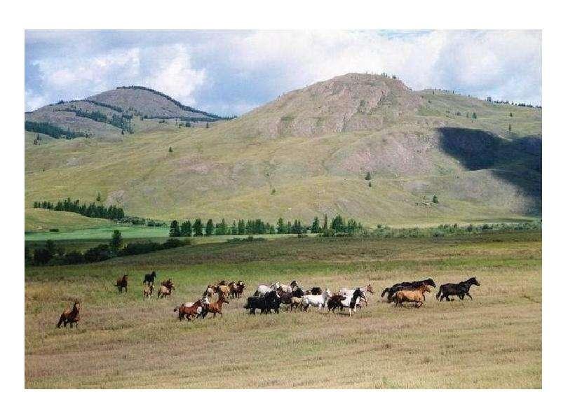 Республика Алтай. История. Быт алтайского народа, слайд 13