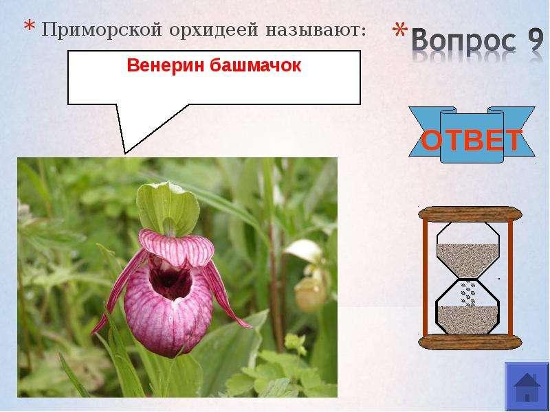 Приморской орхидеей называют: Приморской орхидеей называют: