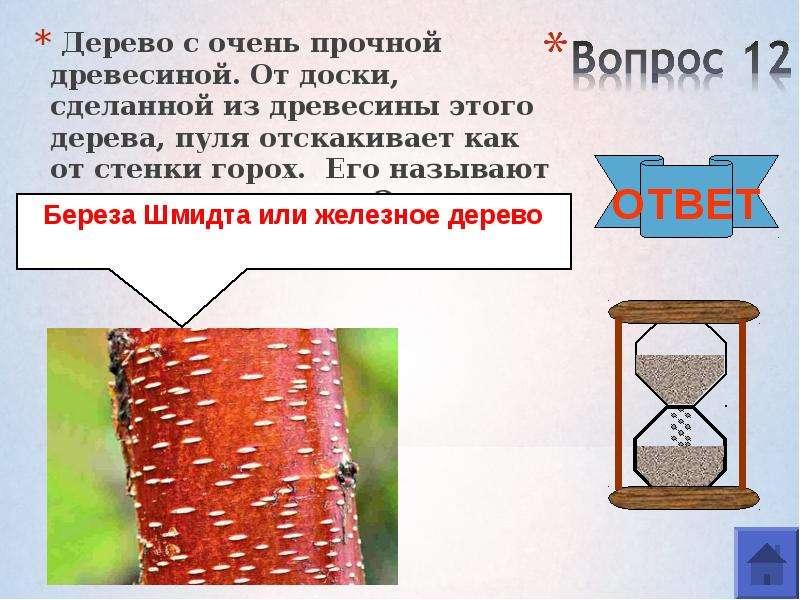 Дерево с очень прочной древесиной. От доски, сделанной из древесины этого дерева, пуля отскакивает к