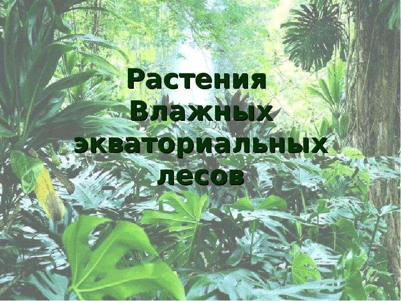 Презентация Растения влажных экваториальных лесов