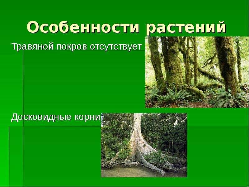 Особенности растений Травяной покров отсутствует Досковидные корни