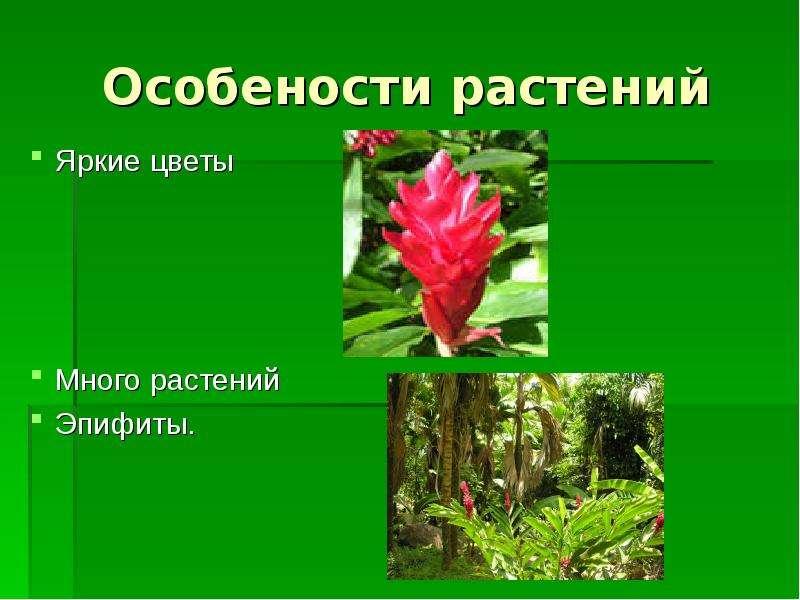 Особености растений Яркие цветы Много растений Эпифиты.