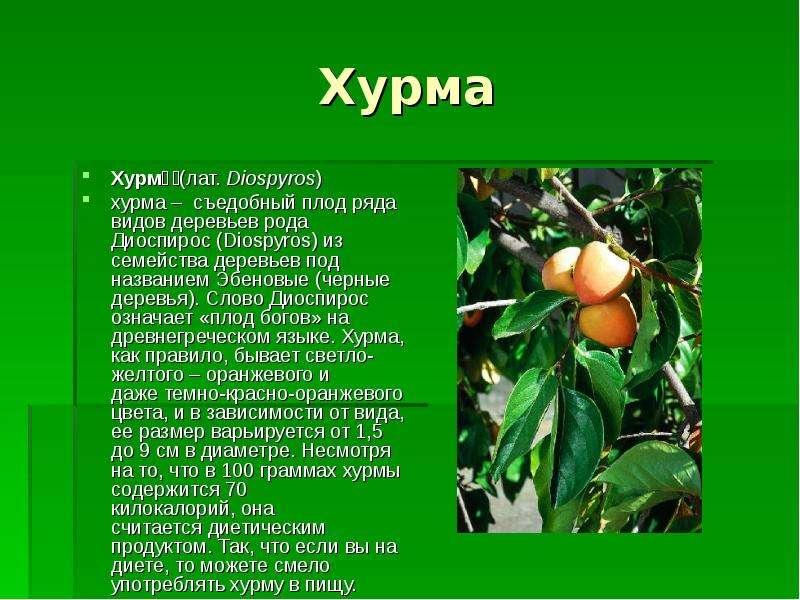 Хурма Хурма́ (лат. Diospyros) хурма – съедобный плод ряда видов деревьев рода Диоспирос (Diospyros)