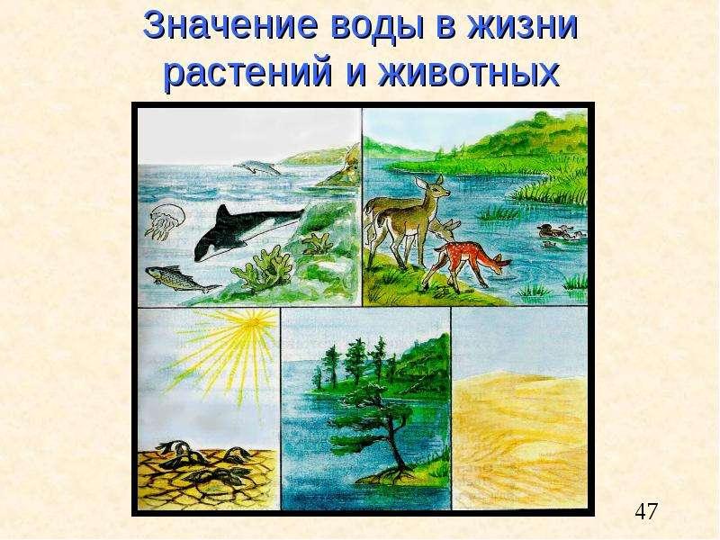 Значение воды в жизни растений и животных