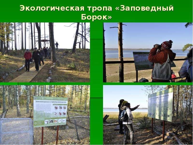 Экологическая тропа «Заповедный Борок»