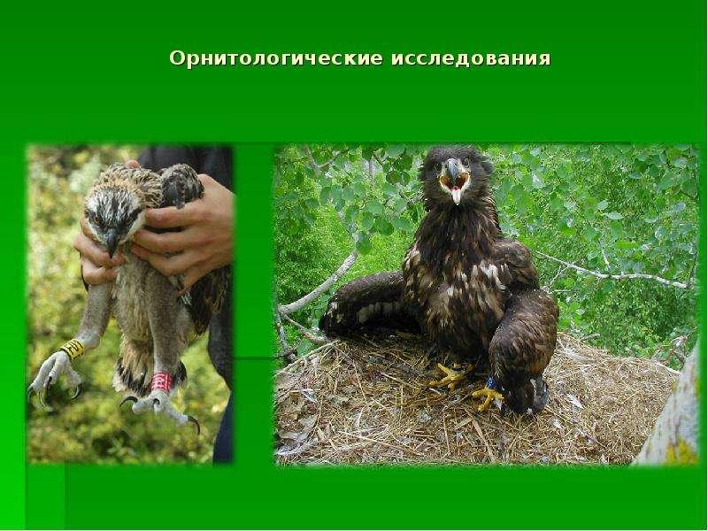 Орнитологические исследования