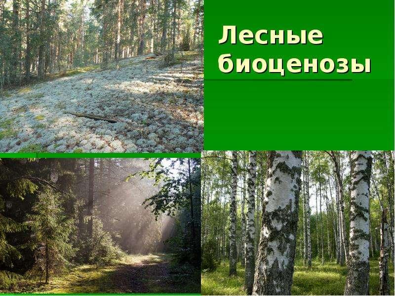 Лесные биоценозы