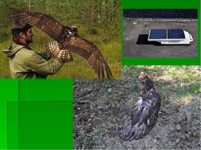 Организация и проведение школьных экспедиций в Дарвинском заповеднике, слайд 31