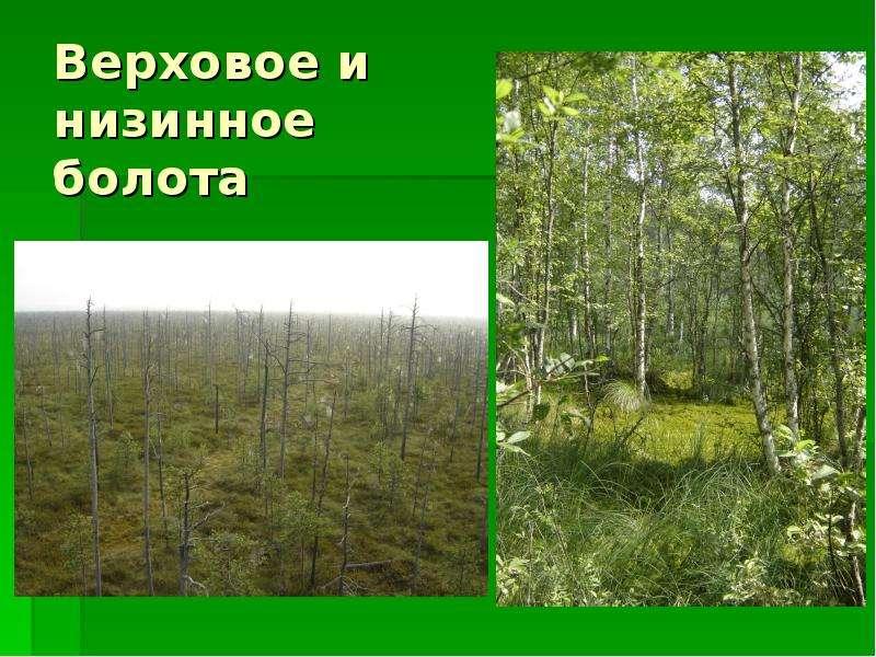 Верховое и низинное болота