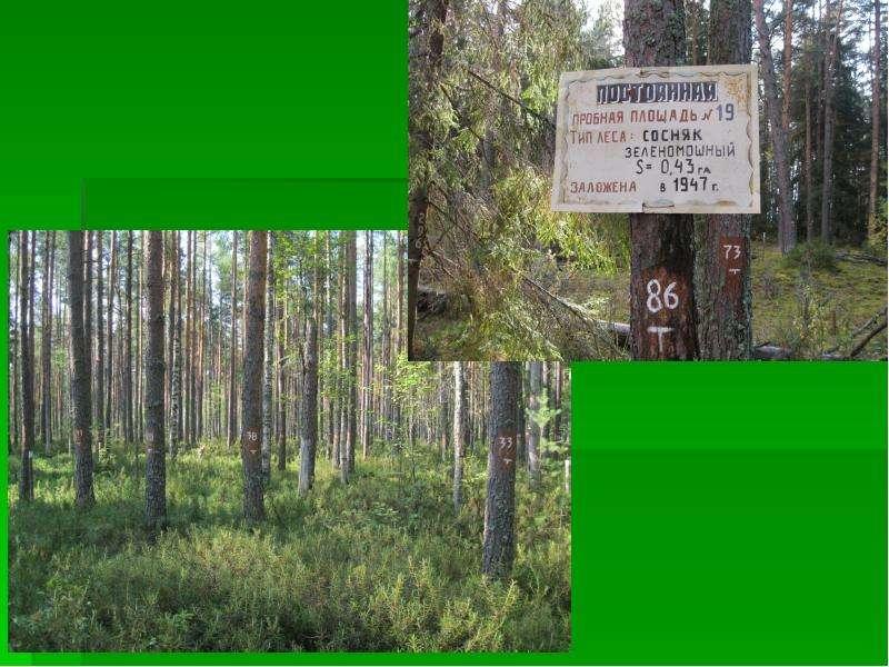 Организация и проведение школьных экспедиций в Дарвинском заповеднике, слайд 9
