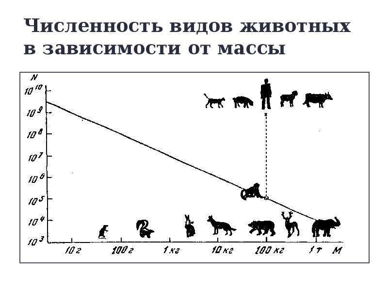 Численность видов животных в зависимости от массы