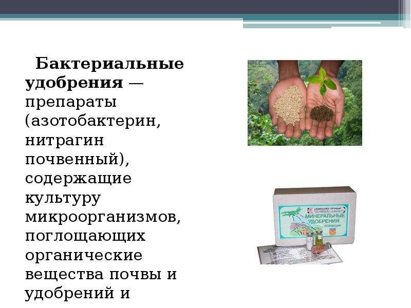 Бактериальные удобрения — препараты (азотобактерин, нитрагин почвенный), содержащие культуру микроор