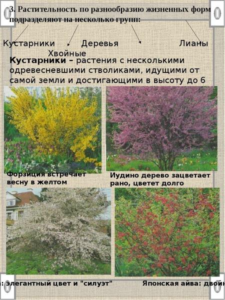 3. Растительность по разнообразию жизненных форм подразделяют на несколько групп: Кустарники – расте