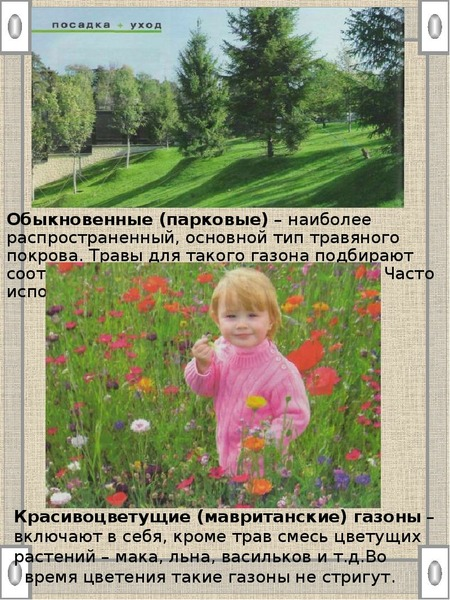 Обыкновенные (парковые) – наиболее распространенный, основной тип травяного покрова. Травы для таког