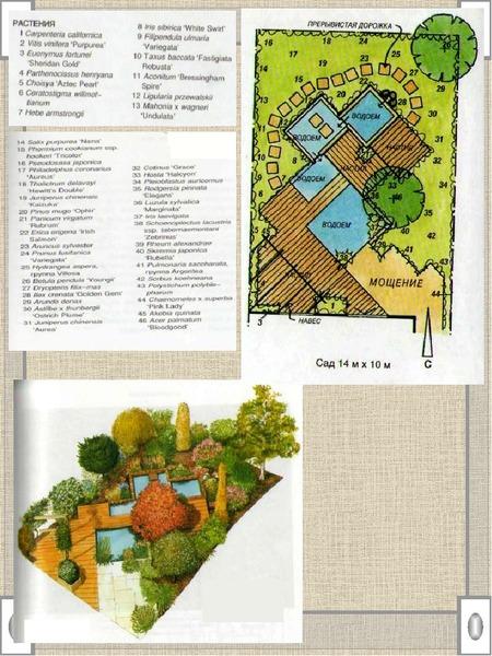 Элективный курс «Ландшафтный дизайн», слайд 22