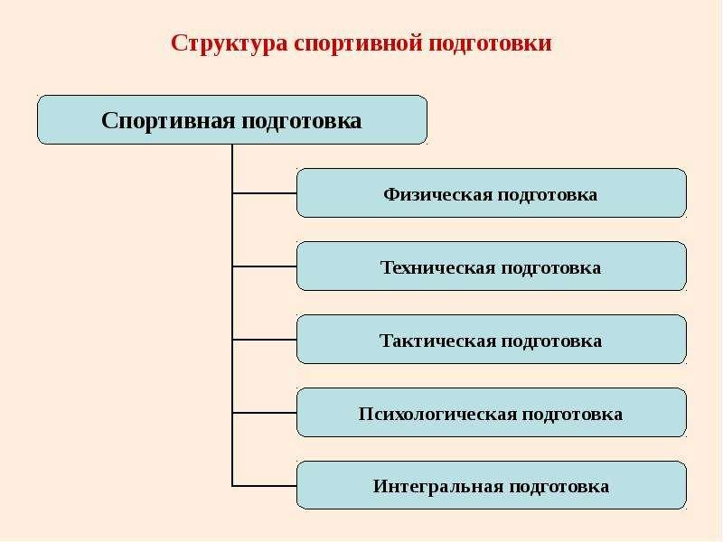 Структура спортивной подготовки