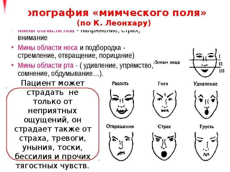 Топография «мимческого поля» (по К. Леонхару)