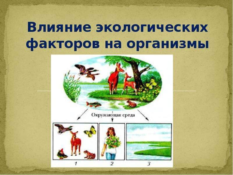 Презентация Влияние экологических факторов на организмы