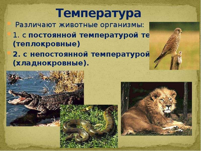 Температура Различают животные организмы: 1. с постоянной температурой тела (теплокровные) 2. с непо