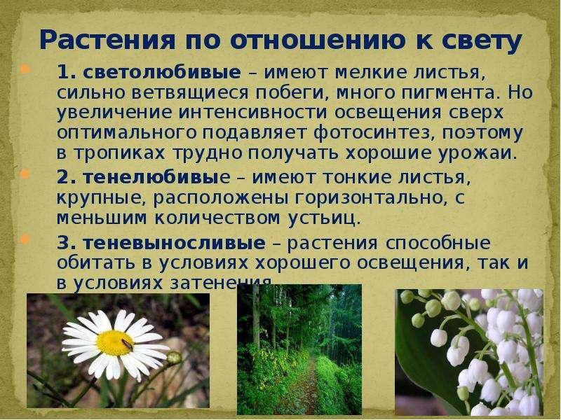 Растения по отношению к свету 1. светолюбивые – имеют мелкие листья, сильно ветвящиеся побеги, много
