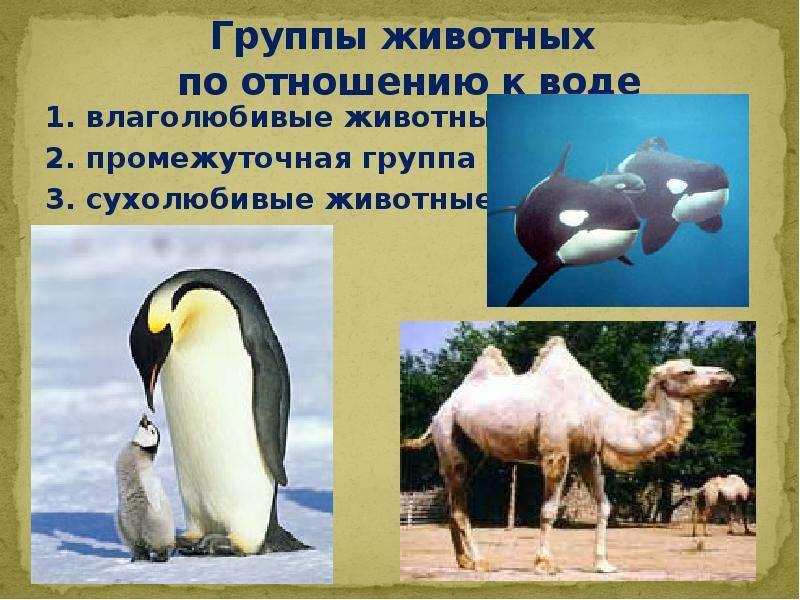 Группы животных по отношению к воде 1. влаголюбивые животные 2. промежуточная группа 3. сухолюбивые
