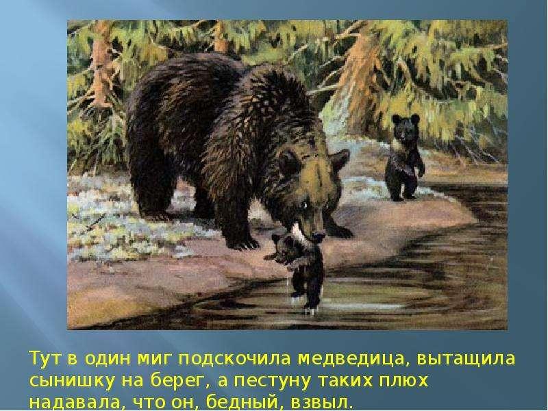 все иллюстрации к рассказу в бианки купание медвежат удобный