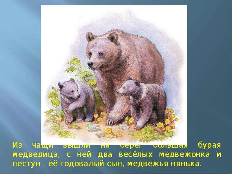 активно иллюстрации к рассказу в бианки купание медвежат кейп, следует